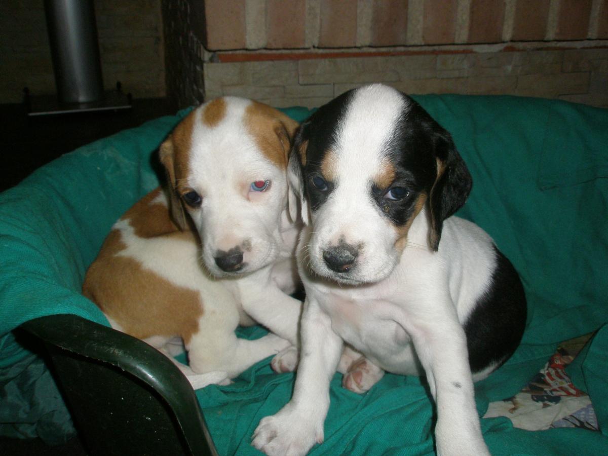 Cachorros solicitud de identificacion y vacunacion antirrabica para el año 2018