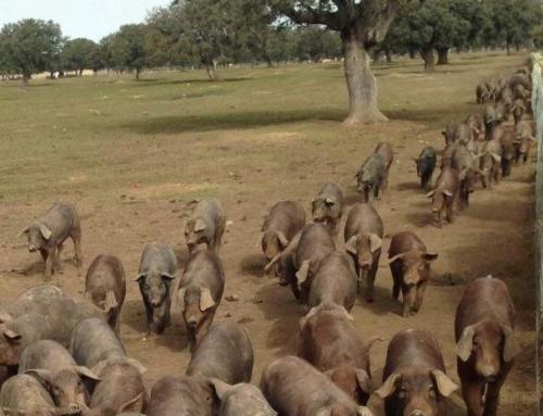 Información sobre la Asociación de Veterinarios de Porcino de Castilla y León