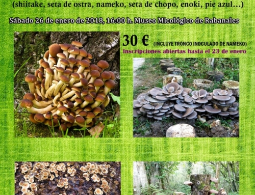 Taller de cultivo de setas en Rabanales (Zamora)