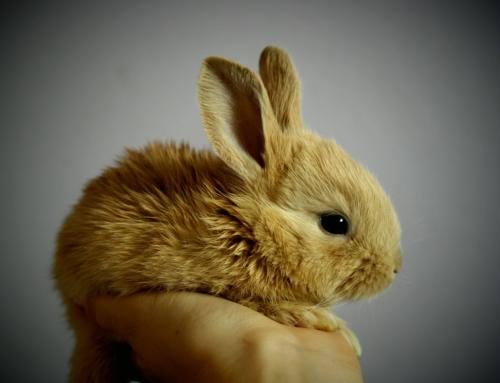 Seminario Medicina del Conejo (9 Marzo Salamanca)
