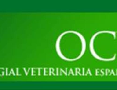 OBTENCIÓN DEL CERTIFICADO DIGITAL A TRAVÉS DEL CONSEJO GRAL. DE COLEGIOS VETERINARIOS DE ESPAÑA