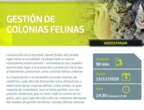 """SEMINARIO WEB: """"GESTIÓN DE COLONIAS FELINAS""""."""