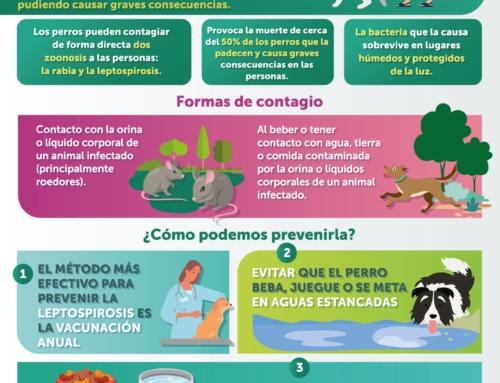 Infografía Leptospirosis