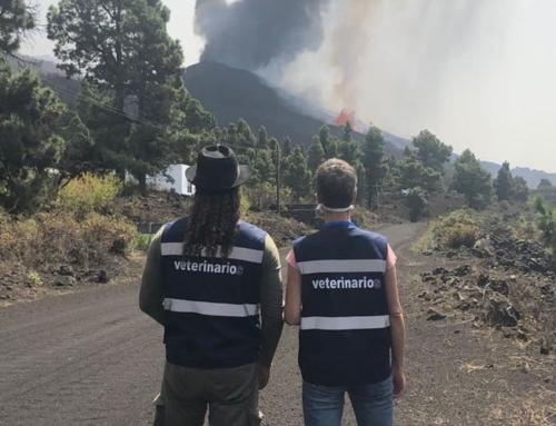 Cuenta de donaciones para contribuir al sistema colegial de atención veterinaria de emergencia por la erupción volcánica de la Isla de La Palma